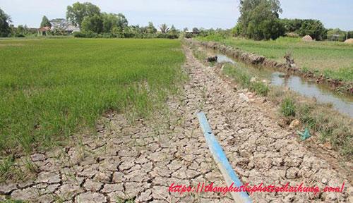 ô nhiễm đất do xâm nhập mặn